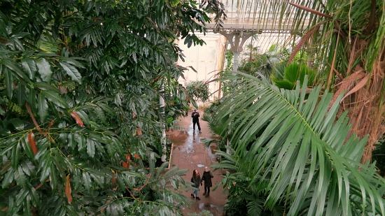 kew gardens palm house plants