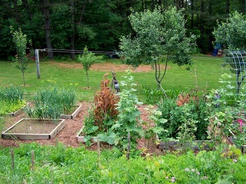 raised garden bed garden