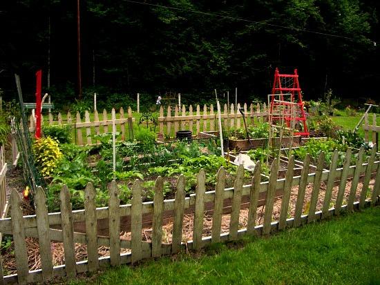 vegetable garden white picket fence