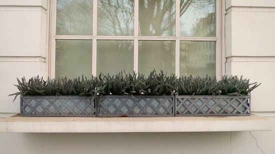 window box inspiration designs