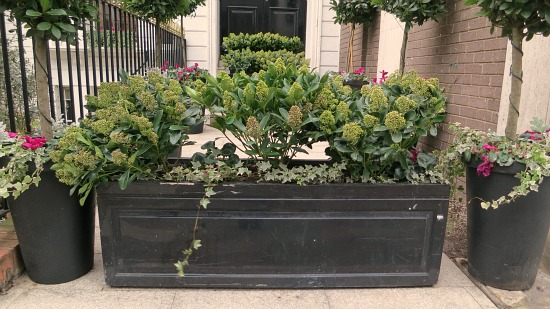 window box pictures