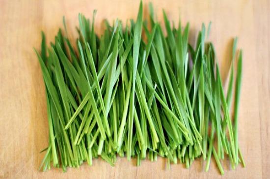 cut-wheatgrass