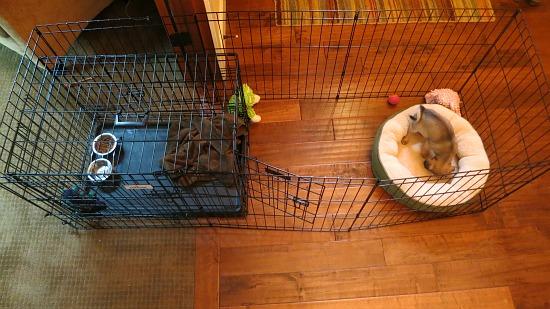 puppy dog fence set up