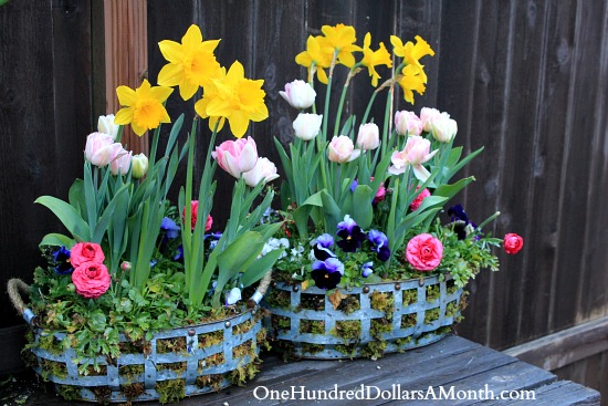 spring flower baskets tulips and daffodils