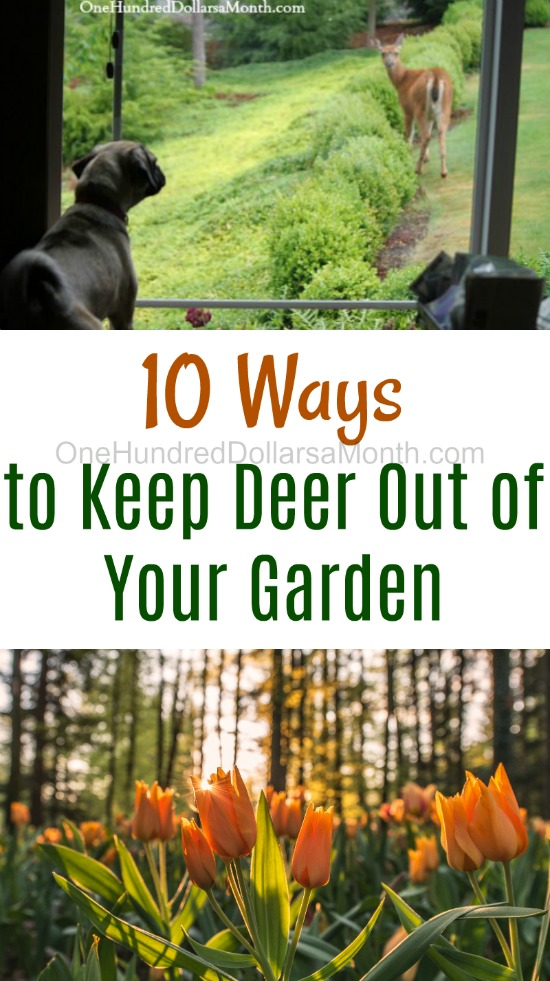 10 Ways to Keep Deer Out of Your Garden - One Hundred Dollars a Month