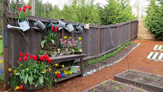 potting bench old watering cans