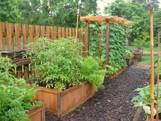 raised garden beds bean trellis