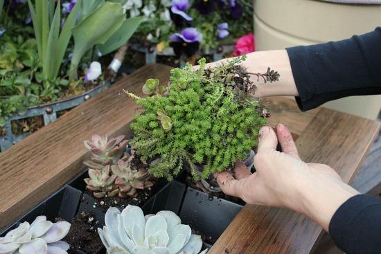 sedum living wall planter frame container
