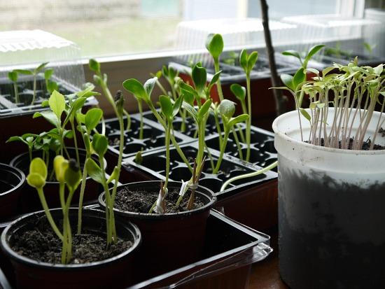 seedlings organic gardening