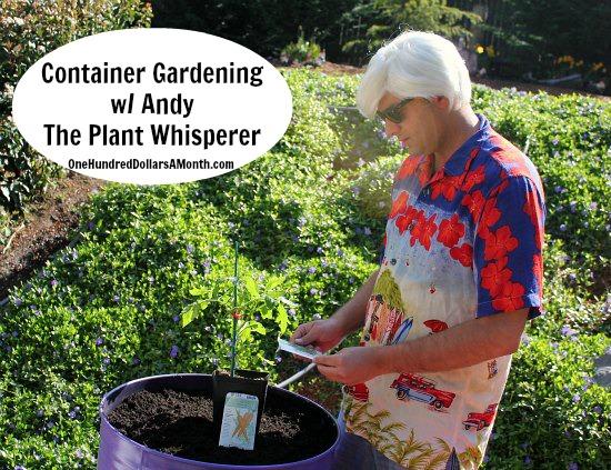DIY-Container-Garden-Steel-Drums-Andy