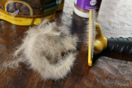 10 Tips On Controlling Dog Shedding One Hundred Dollars A Month