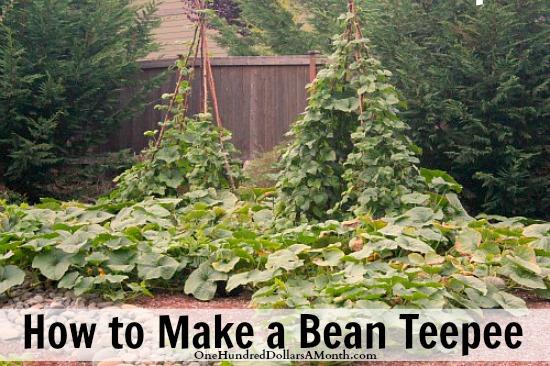 how-to-make-a-bean-teepee