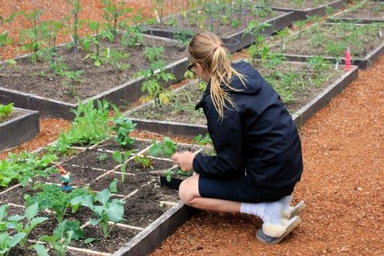square foot gardening organic mavis