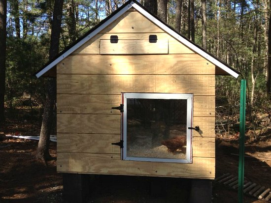 chicken coop door