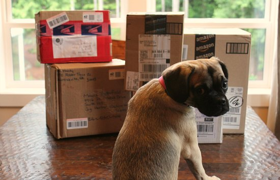 puggle puppy packages