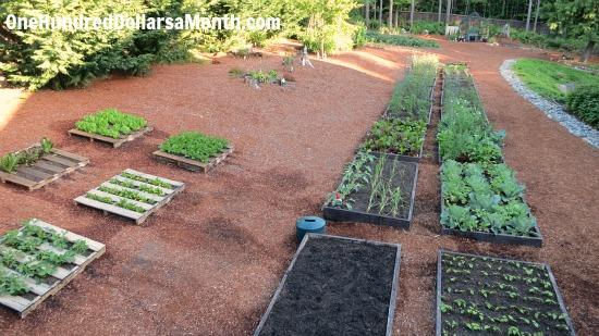raised garden beds backyard gardening