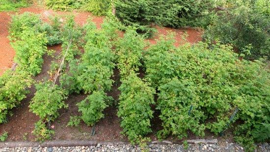 spooner farms raspberries