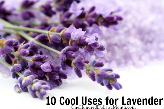 10 Cool Uses for Lavender