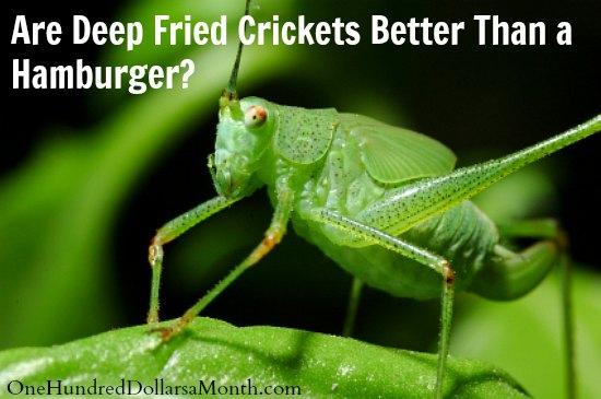 Are Deep Fried Crickets Better Than a Hamburger