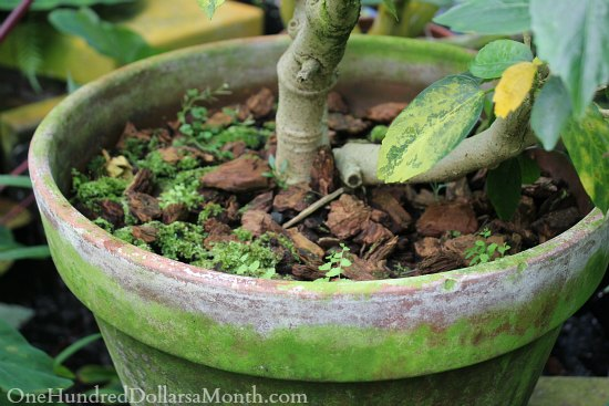 Container Garden Ideas Moss Pots