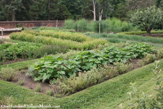 George Washington's Mount Vernon Garden