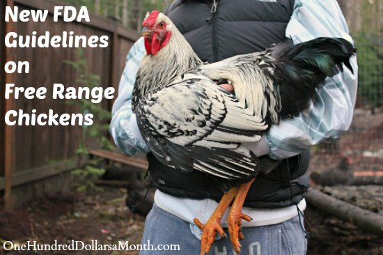 New FDA Guidelines on Free Range Chickens