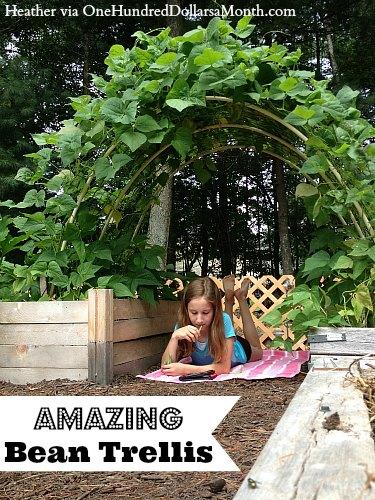 bean garden trellis