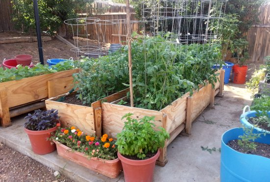 gardening in small spaces - container