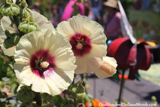 white and purple hollyhock