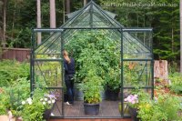 Greenhouse Vegetable Gardening -Tomatoes, Cucumbers ...