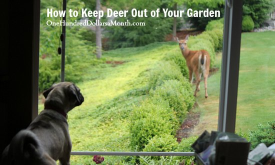 How to Keep Deer Out of Your Garden Stop Feeding Them One