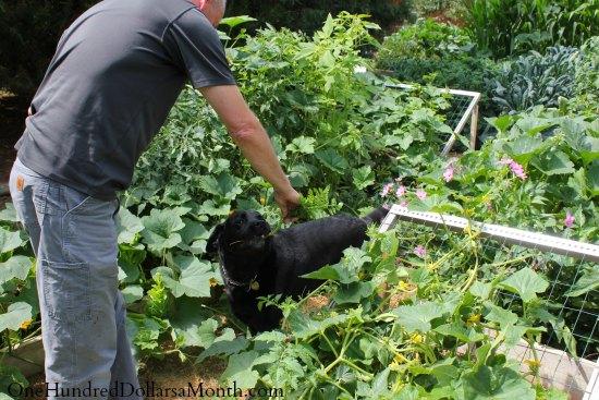 curtis garden dog
