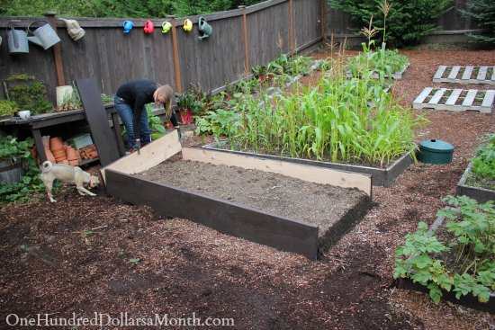Building New Garden Boxes - One Hundred Dollars a Month