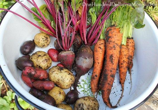 root vegetbales potatoes carrots beets