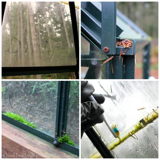 Cleaning and Disinfecting the Greenhouse for Winter Gardening