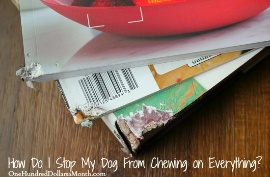 how to keep dogs from chewing furniture