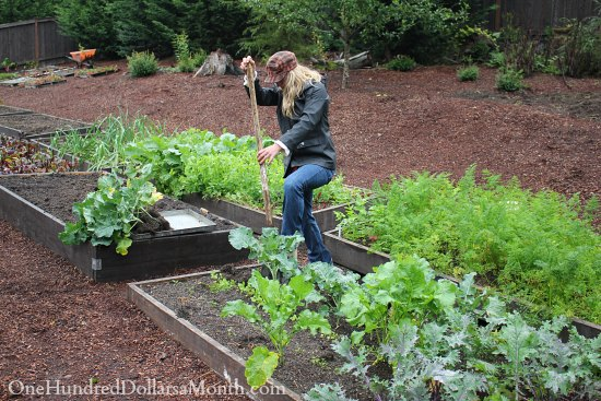 fall vegetables in garden