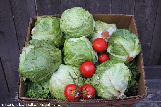 lettuce tomatoes food waste