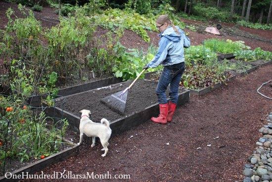 seattle garden blog mavis butterfield