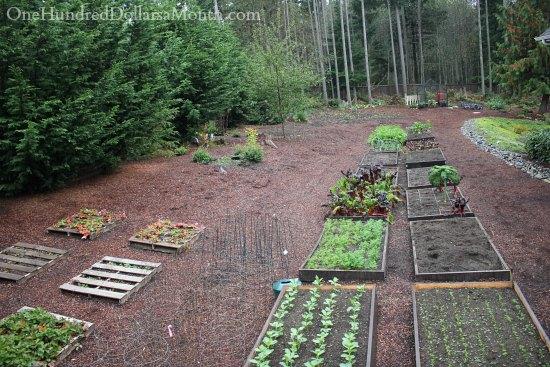 winter garden gardening