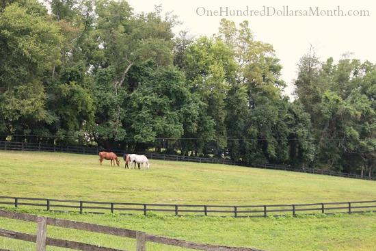 James Madisons Montpelier Horses