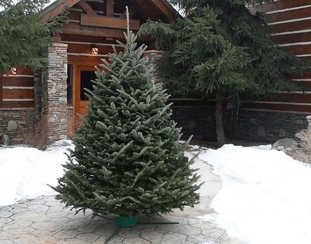 Amazon archives page 409 of 432 one hundred dollars a month christmas tree delivery m4hsunfo