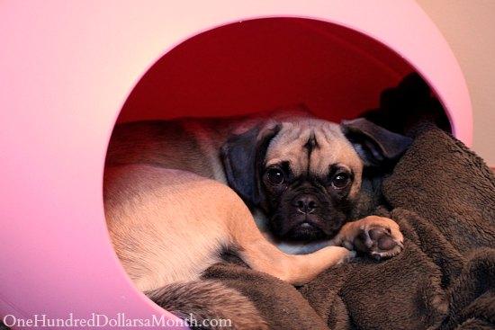 puggle dog plastic egg bed
