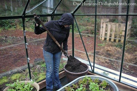 dirt in pots greenhouse