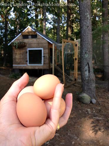 eggs in hand
