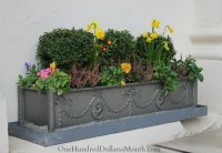 Window Box Ideas for Late Winter and Early Spring