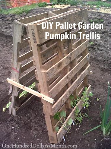 diy pallet garden trellis for squash