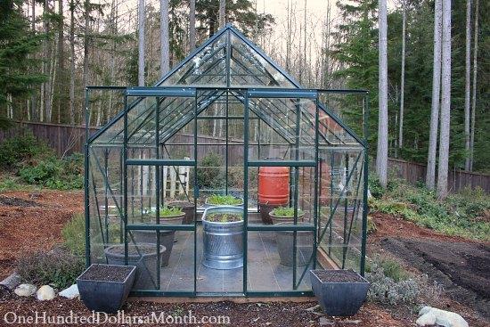 growing lettuce in greenhouse in winter