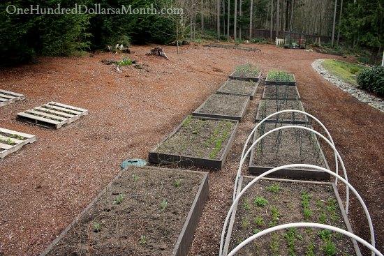 backyard garden beds