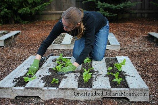 pallet garden gardening